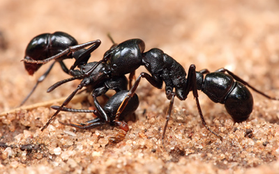 we can assit with all types of ant control